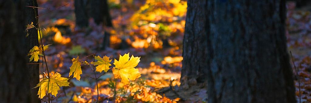 bosco-forestale